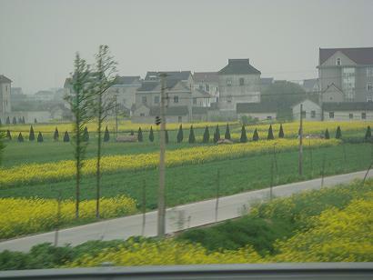 杭州 農家と菜の花畑①